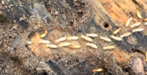 termite treatment - pest control